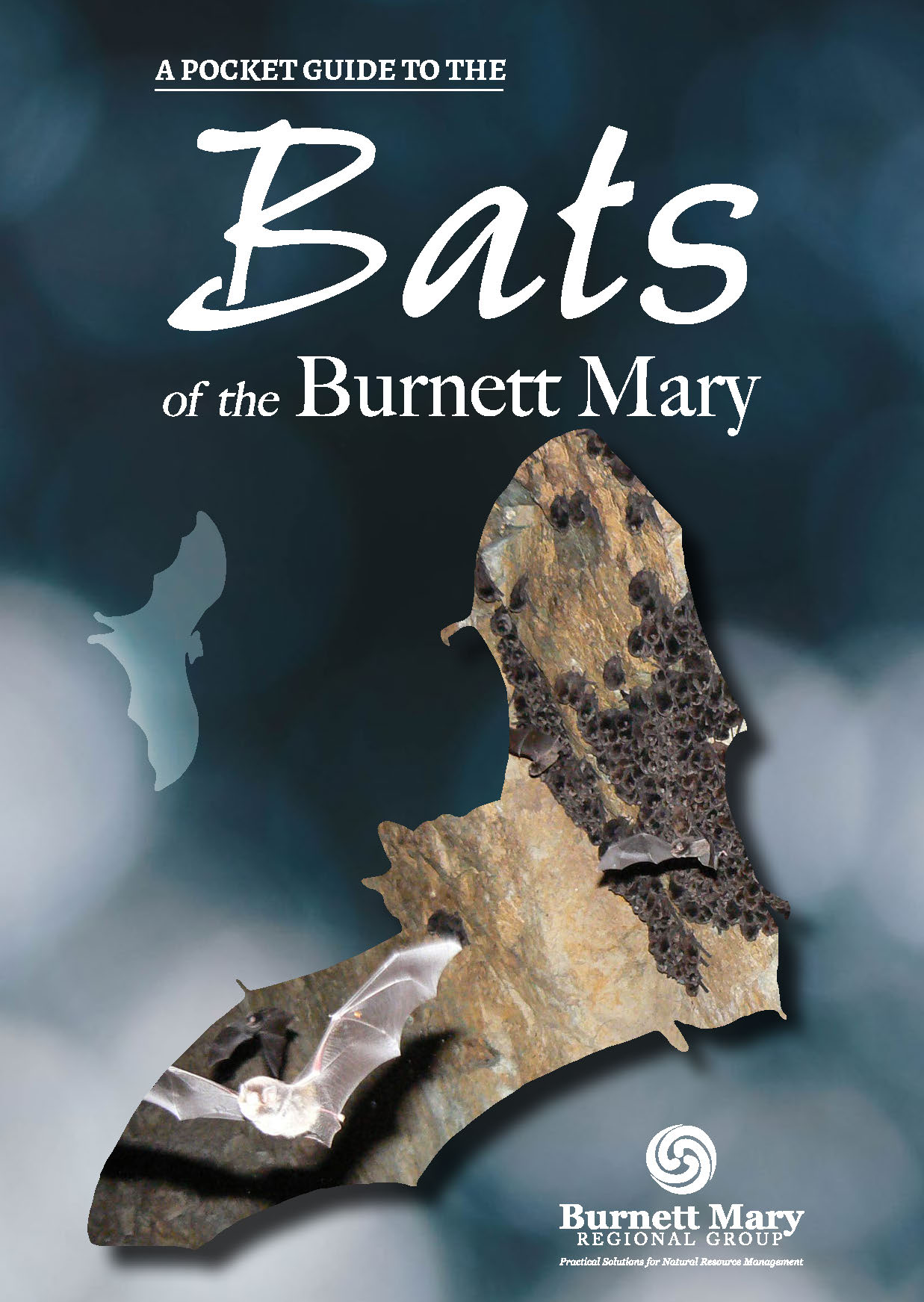 Pocket Guide to Bats of the Burnett Mary Cover