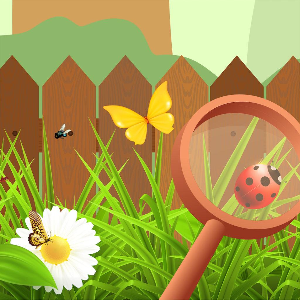 Wild Pollinators
